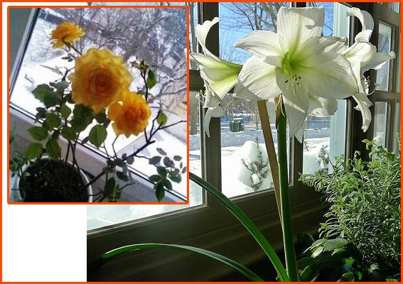удобрение для растений комнатных после пересадки
