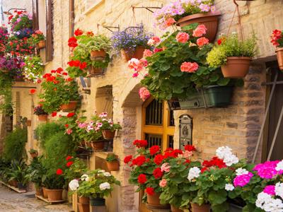 Цветы в городе