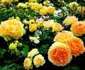 Цветы в северных широтах РФ