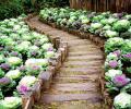 Что такое миксбордеры, пейзажные цветники и сад-огород.