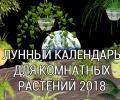 Лунный календарь ухода за комнатными растениями 2018